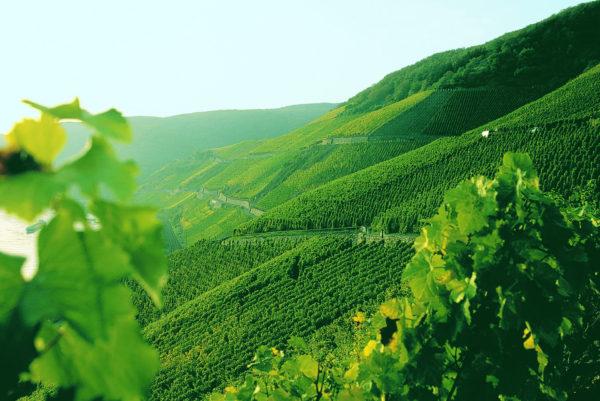 Weingut Bopparder Hamm